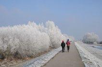 zima-14
